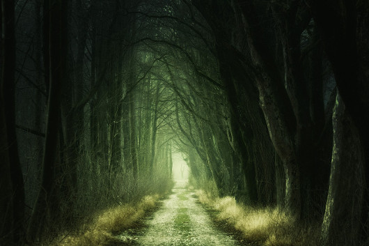 This forest in Romania is considered the most haunted in the world