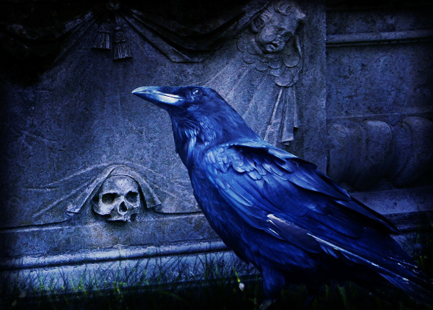 Raven in Cemetery